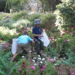 Photo of two kids at JAIS summer camp collecting something outdoors by flowers